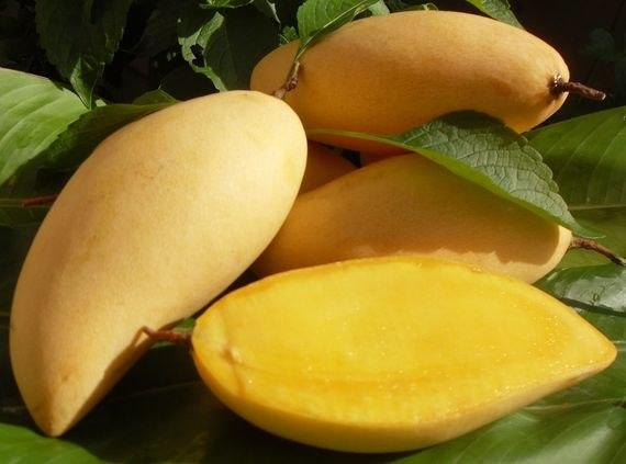 Okrung Mango Varieties